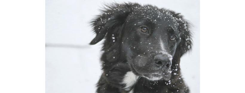 proteggere cani dal freddo
