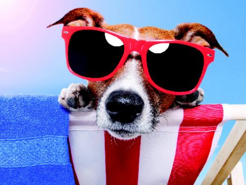 9 consigli per proteggere il tuo cane dal caldo estivo!