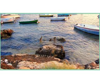 Porto Cesareo papere 2